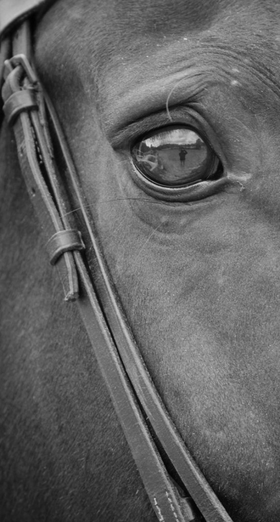 close up of Onyx's eye