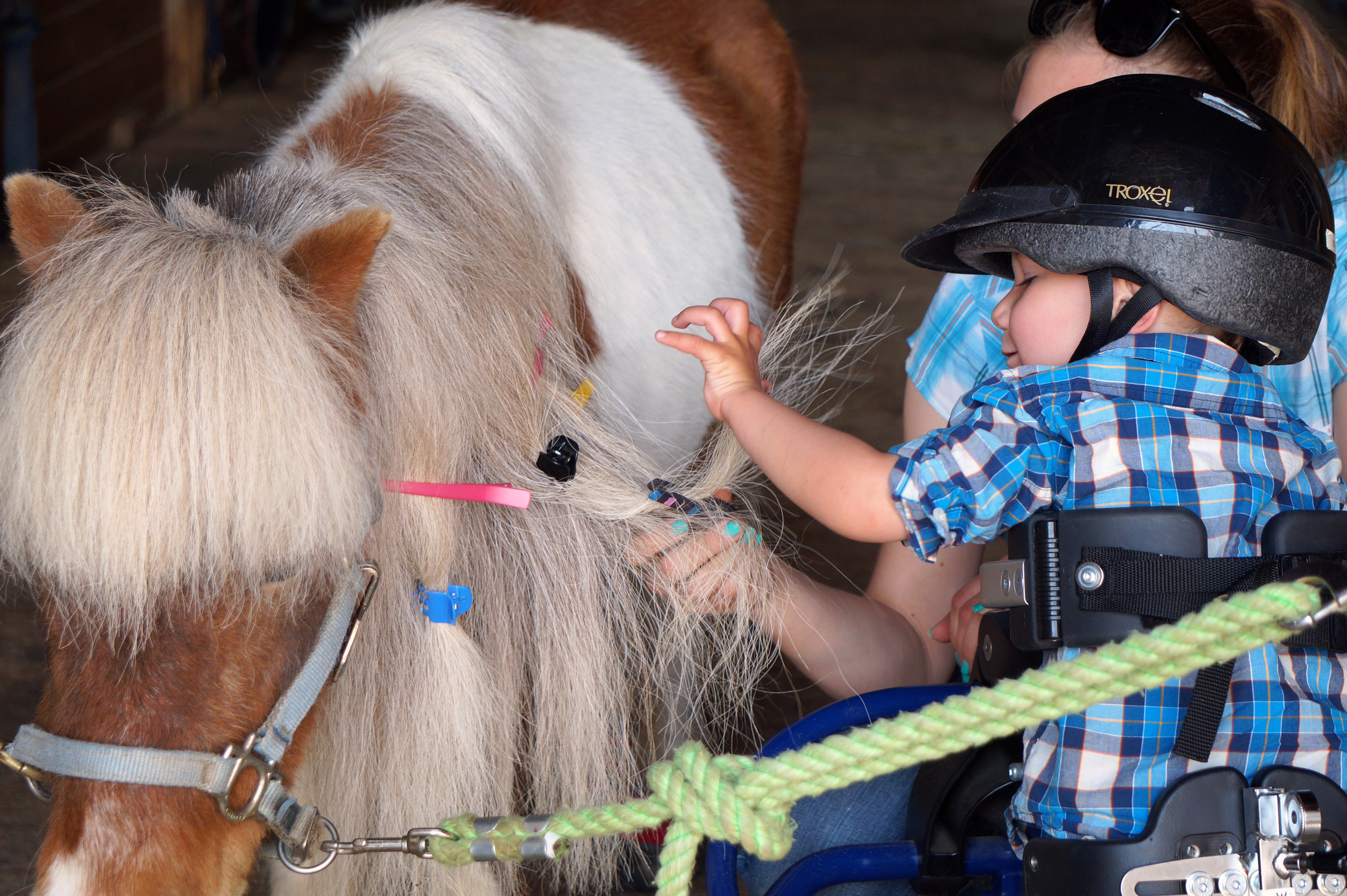 photo of a therapy student grooming a horses mane
