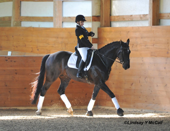 Para-Dressage rider on horse
