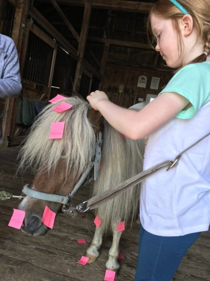 Photo of a young equestrian labeling the parts of a miniature horse.