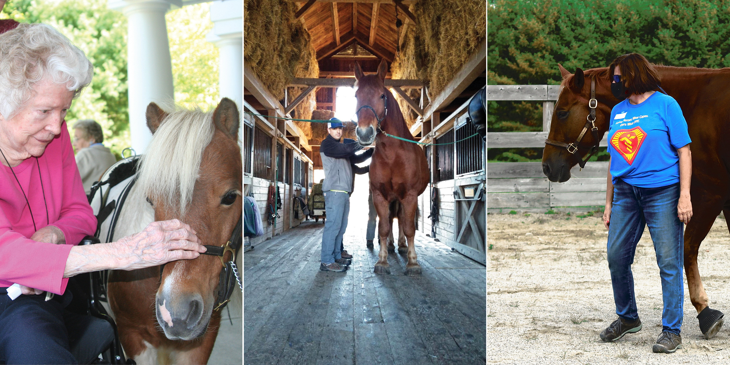 Mental Health/Equine-Assisted Learning Program